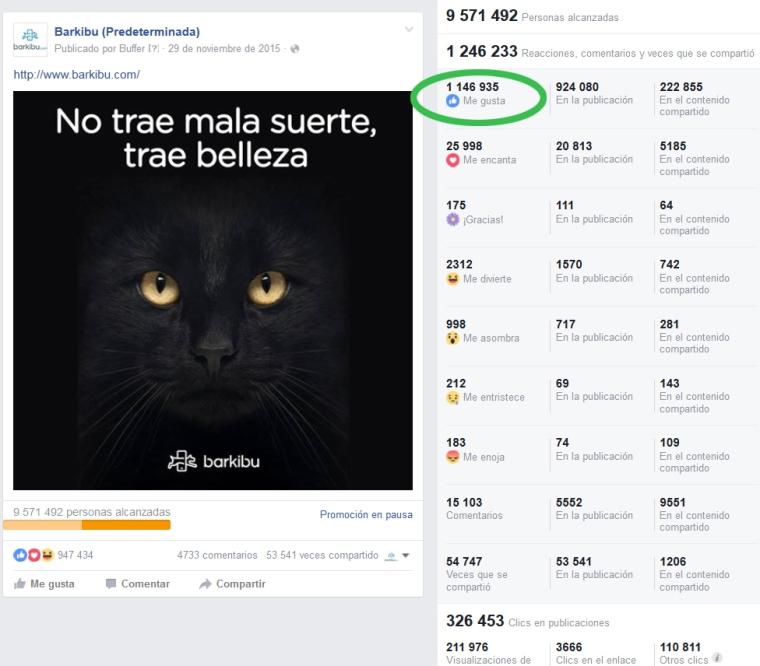 barkibu-viral-adopcion-gato-negro